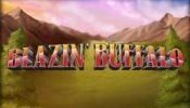 b buffalo