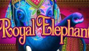 royal elephant everi