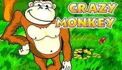 crazy monkey logo