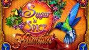 sugar and spice hummin